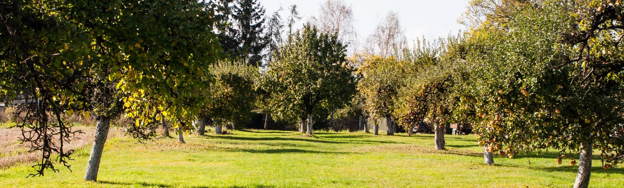 Nazaretańskie Ogrody